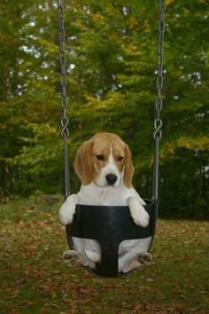 Abby likes to swing