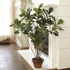 Fiddle Leaf Tree--because my real one is so finicky