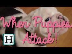 When Puppies Attack! | HuffPost Mashup