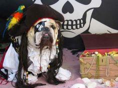perro vestido de pirata