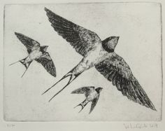 Barn swallows drypoint etching