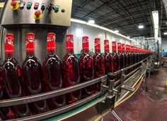 A great day to start off the week, with more redcat! Red Cat, Wine Time, Wine Rack, Wines, Drink, Home Decor, Beverage, Decoration Home, Room Decor