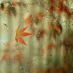Fall rain on a window... get me a good book, cup of tea and a soft blanket