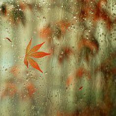 35 Beautiful Examples Of Rain Photography / Monday Inspiration / Smashing Magazine Autumn Rain, Autumn Leaves, Maple Leaves, Soft Autumn, Autumn Harvest, Dew Drops, Rain Drops, Water Drops, Bokeh