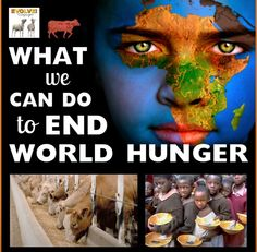 The grain we feed animals for humans to eat would end world hunger !