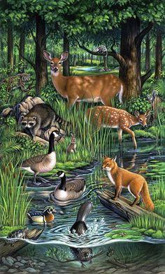 Woodland Creatures, Woodland Animals, Forest Animals, Animals And Pets, Cute Animals, Woodland Art, Interesting Animals, Animal Facts, Wildlife Art
