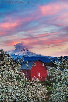 Apple Orchard View of Mt. Hood, Hood River Area, Oregon, USA...  ['Blossom...' by Jeremy Cram, via 500px]