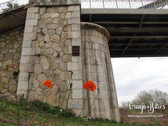 Caja nido para murciélagos. Pont de Ferro, Alzira (Valencia)