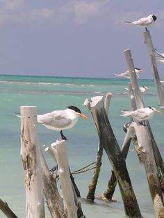 Birdwatching on South Padre Island in Texas (Favorite Places Art)