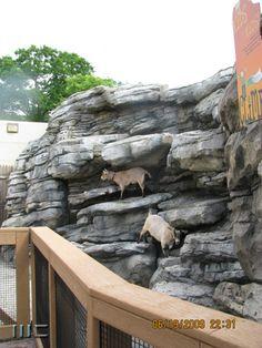 Goat Yard at Toledo Zoo - Nature's Neighborhood
