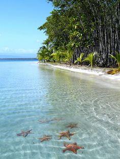 Bocas del Toro es una de las playas caribeñas mas lindas de Panamá, pero es especialmente conocida por tener una de las pocas playas de estrellas del mundo. ¡Si, una playa donde viven y moran varias estrellas de mar!