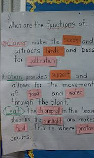 Science Gal: Science Notebooks...vocabulary cloze anchor chart activity, formative assessments etc.