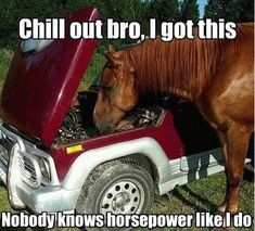 Haha, Nobody knows horsepower like this guy :) Click on the image for more hilarious car memes. #lol #spon