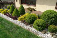 Ogród mały, ale pojemny;) - strona 73 - Forum ogrodnicze - Ogrodowisko