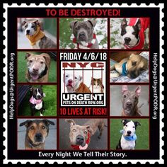 TO BE DESTROYED 04/06/18 - - Info  Tonight's list has been posted. -  Click for info & Current Status: http://nycdogs.urgentpodr.org/to-be-destroyed-4915/