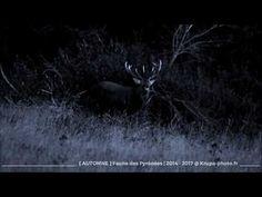 Faune des Pyrénées Film réalisé avec des images prises entre 2014 et 2017 sur toute la chaîne des Pyrénées. #pyrenees #nature #animal #wildlife #chasse #Montagne #Pyrénées