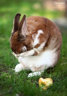 This rabbit is adorable although it looks sad or overwhelmed. Imagine if you could remember that you are still adorable and lovable even if you feel sad or overwhelmed on the inside:)