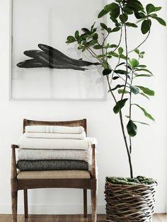 große Zimmerpflanze als grüne Deko Idee