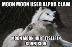 Dammit moon moon! Your not a Pokémon!