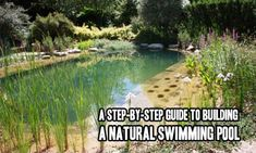 Bionova natural swimming pools keep water pristine and pure using deep middle and shallow water for Natural swimming pools a guide to building
