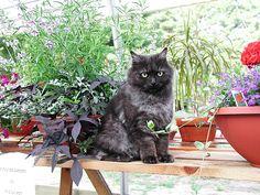 Cat in greenhouse