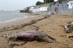 Due amici lo hanno trovato nella notte: le onde lo hanno spinto sulla spiaggia