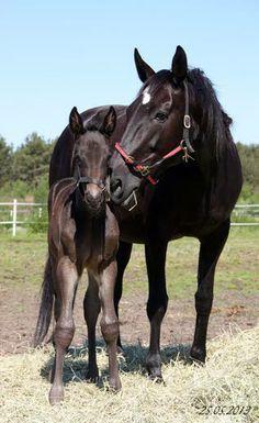 Mama and baby....