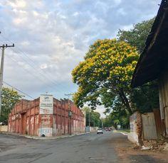 Ybyrapyta en una calle de Asunción-Paraguay