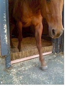HORSE SWEET ITCH STABLE SCRATCH BOREDOM BREAKER GROOMING BUTT ITCHING BOARDS
