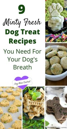 These 9 mint dog treat recipes will leave your dog's breath feeling fresh and fabulous. Oh, and they're super easy to make.