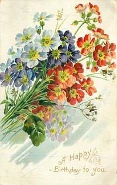 Multicolored primroses, 1909.