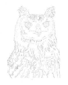 Eagle-Owl-Line-Drawing.jpg 1,600×2,013 pixels