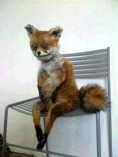 Terrible Taxidermy Animals – The Fox is Watching You!