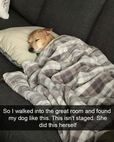 My dog does this ALL the time especially in the Winter