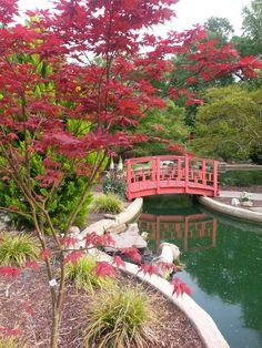 New Hanover County Arboretum Wilmington, NC