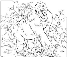 gorilla coloring page | reading club, kindergarten and activities - Silverback Gorilla Coloring Pages