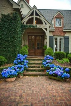 Beautiful blue flowers leading up to the door