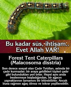 Allah, Website