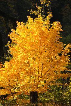 autumn by katrin Fröhlich