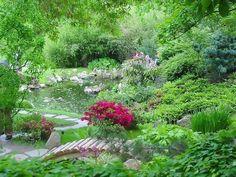 Самые неприхотливые растения для сада   Пожалуй точно не ошибусь, если скажу: большинство из нас хотят иметь растения, за которыми было бы легко ухаживать. И это понятно: где взять время для капризных? Поэтому хорошо иметь в арсенале именно неприхотливые растения. А для этого надо их знать, что называется в лицо. Наверное, бывалые дачники уже и знают многие и многие такие неприхотливые деревья, кустарники и цветы, а вот новичкам, думаю, будет очень полезен предлагаемый список.   Из деревьев…
