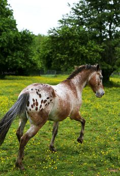 }{  Spotted horse!