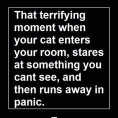 Or looks out the door of the room you are in with terror in their eyes!!!