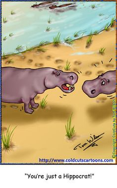 Hippopotamus hypocrite