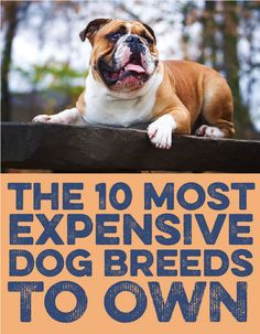 Here's the 10 MOST expensive dog breeds to own!
