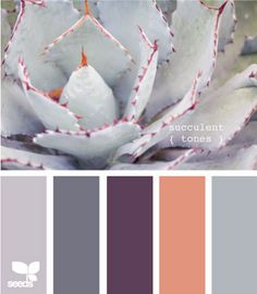 succulent tones.... I would probably add a warmish green or coolish yellow too