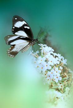 Butterfly dance by Lyn Evans