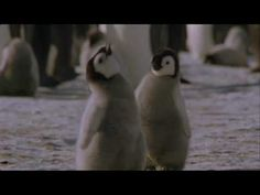 Cute Baby Penguins - Music by Jennie Muskett