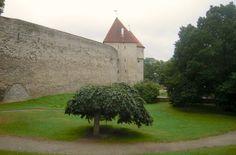 Lumiukon mietteitä, Tallinna