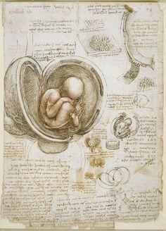 Estudio del feto y del útero de la colección de dibujos de anatomía del cuerpo humano de Leonardo da Vinci.