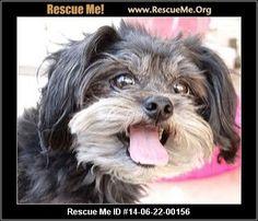― California Maltese Rescue ― ADOPTIONS ―RescueMe.Org